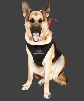 K9-Front1